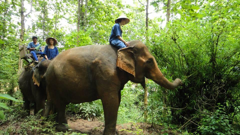 半日:象乗り体験 (象乗り1時間)※観光地の入場料は含まない料金となります。